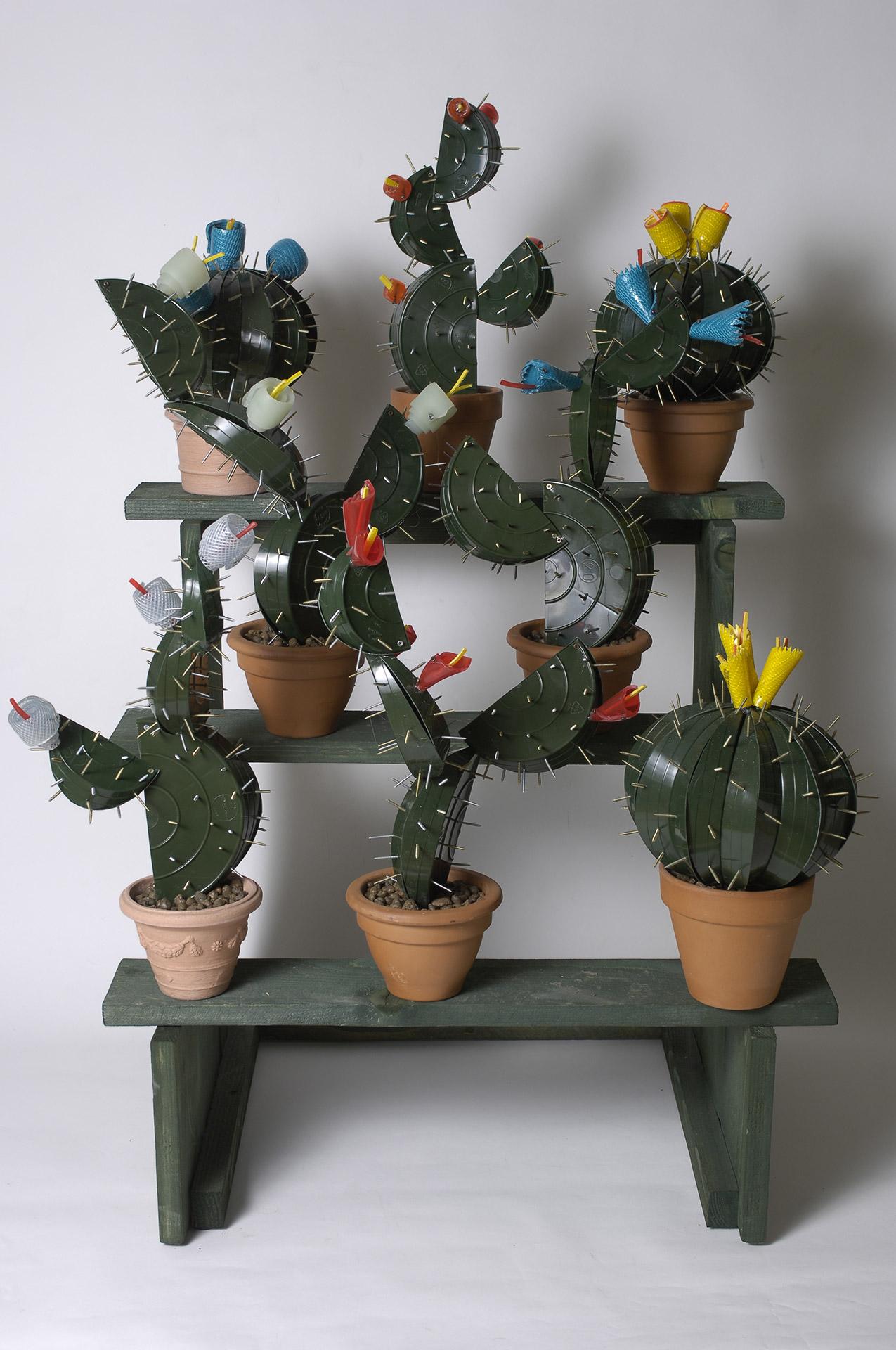 Cactus Alessadnro_2