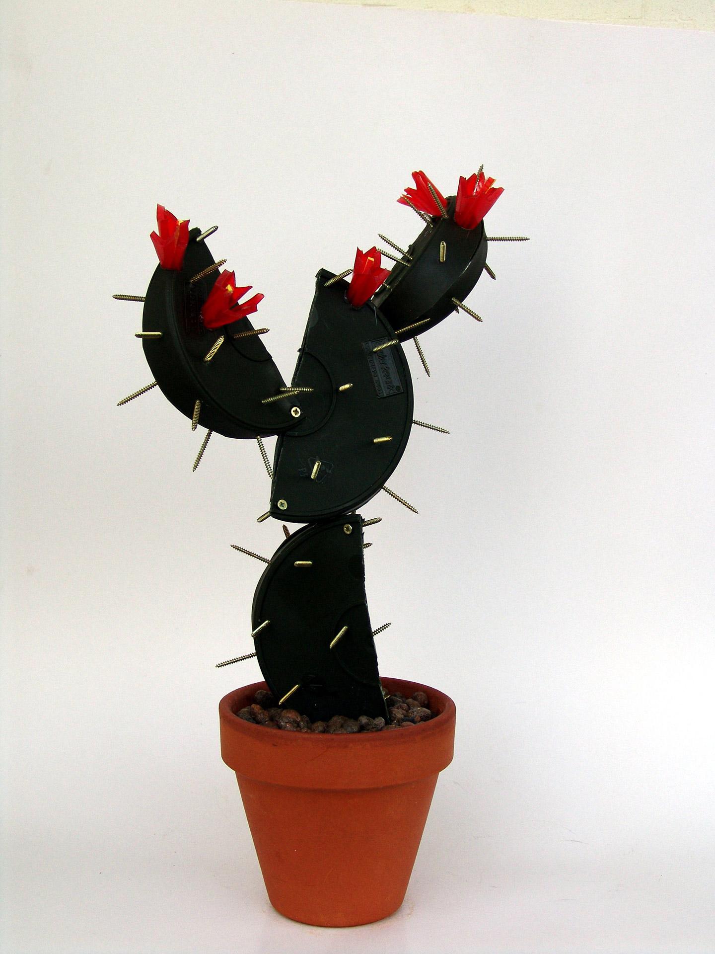 Cactus Alessandro